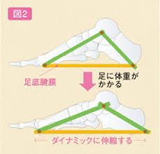 足の伸び縮み